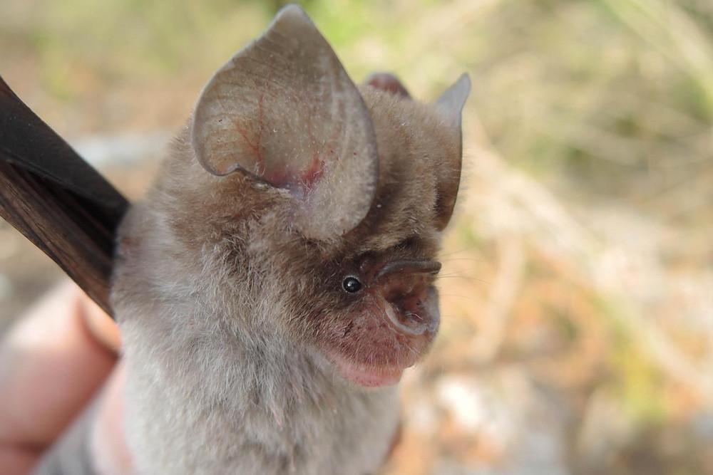 Morcegos no Quênia