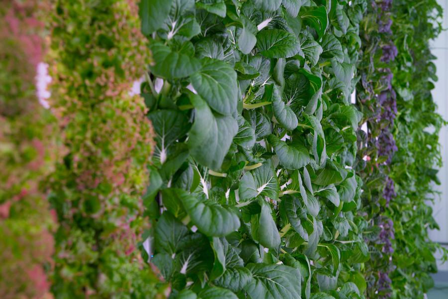 Plantação da Plenty