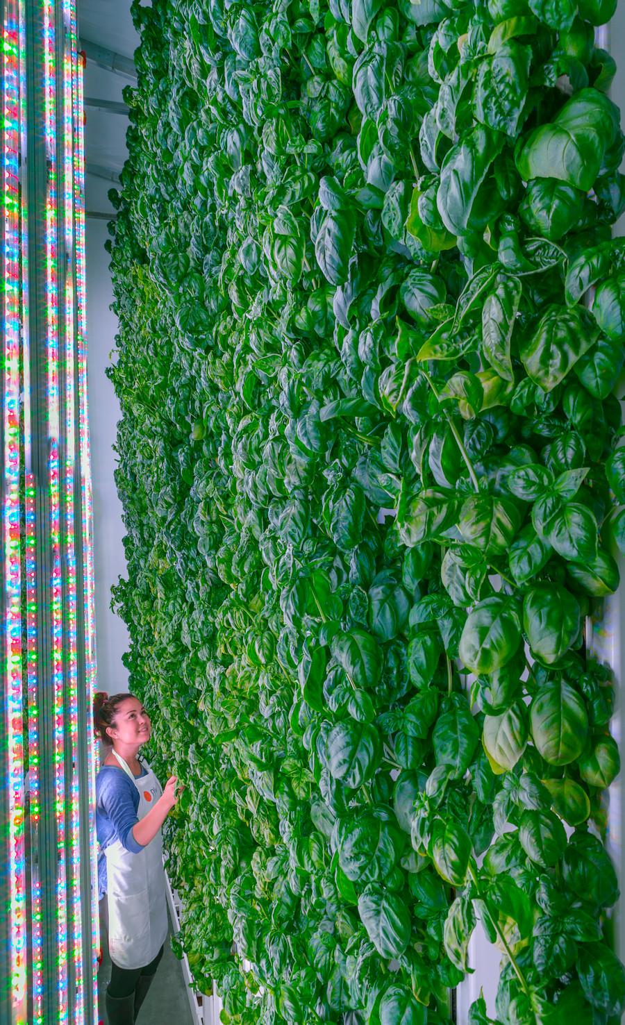 Fazenda vertical da Plenty