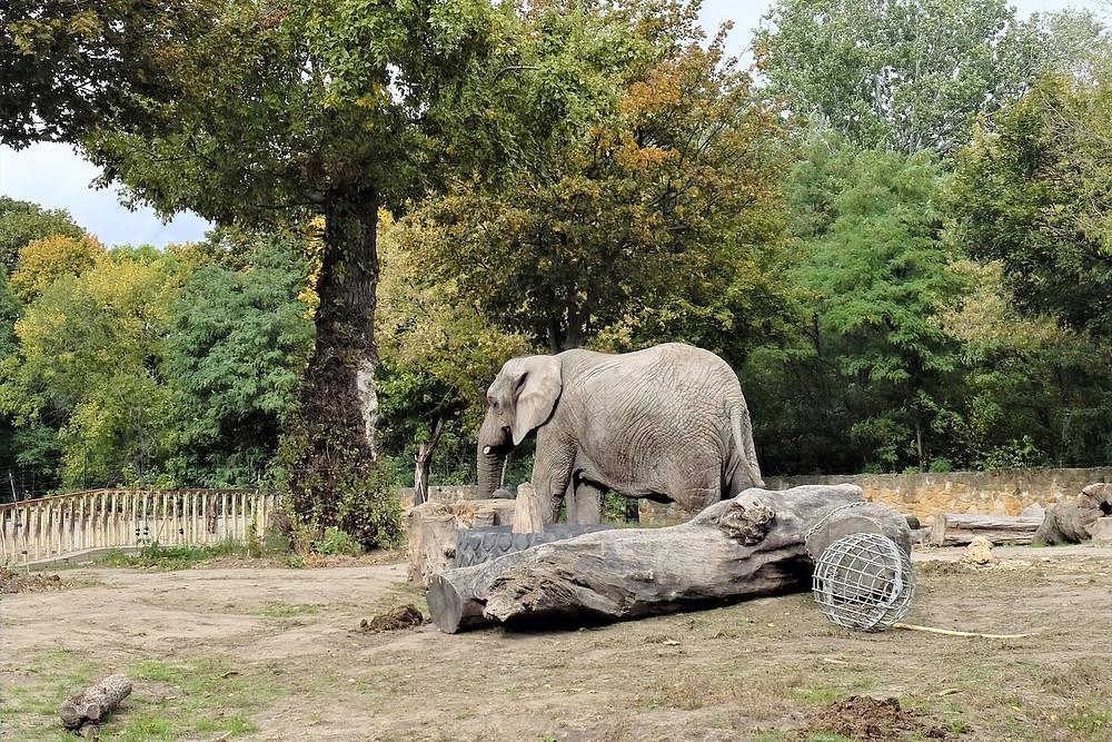 Elefante no zoo de Varsóvia
