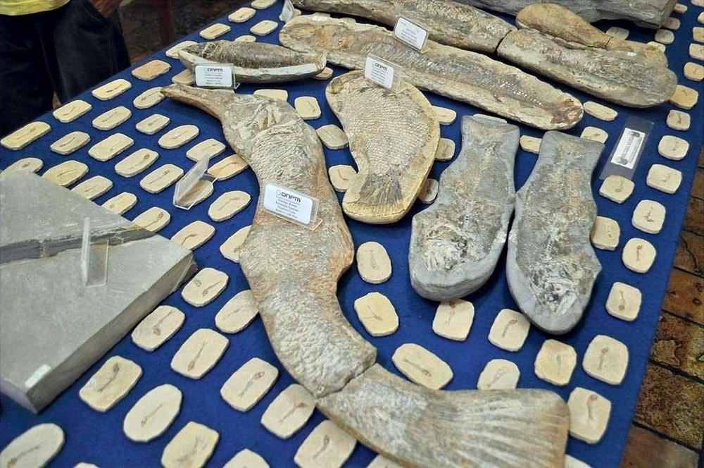 Fósseis de peixe