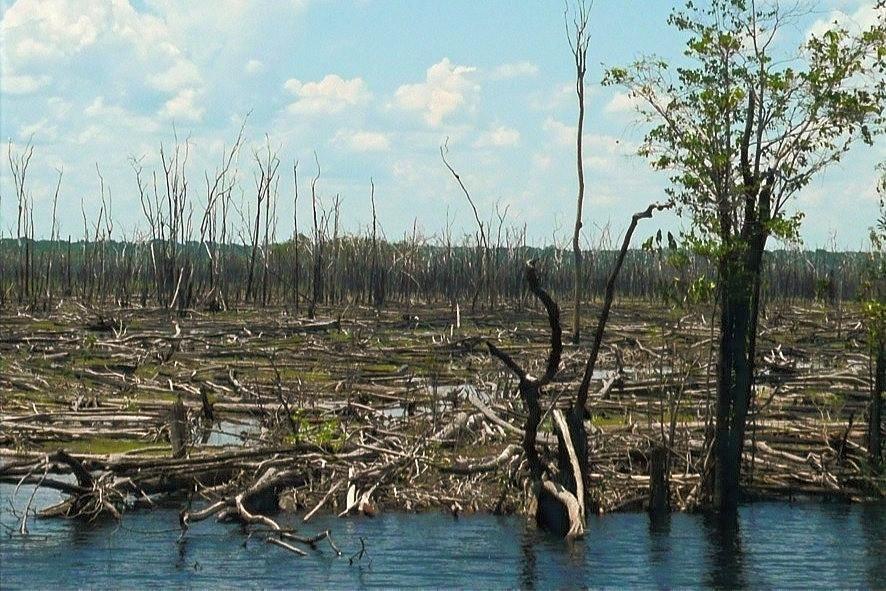 Floresta queimada na bacia do rio Negro