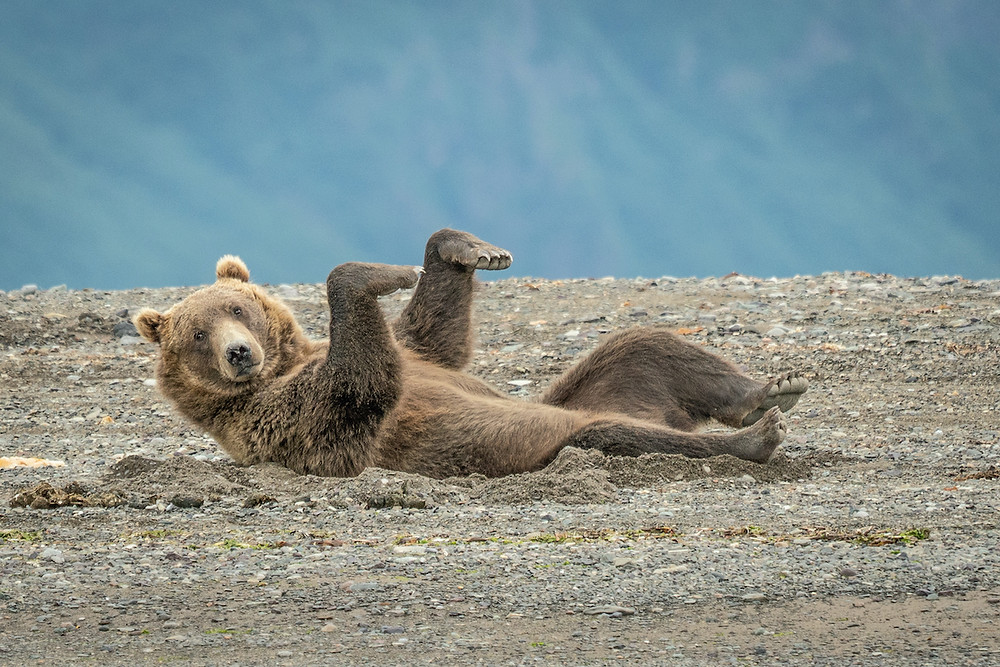 Finalistas do The Comedy Wildlife Photography Awards 2020