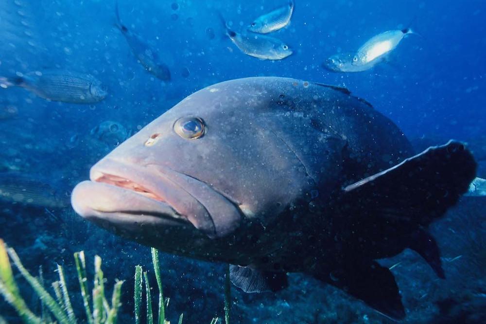 Redes de pesca em Arrail do Cabo