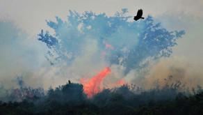 Queimadas batem recorde no Pantanal em 2020