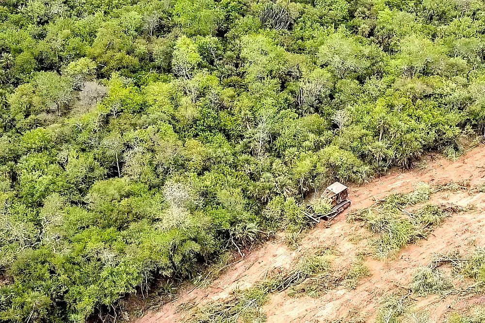 Chaco paraguaio sendo desmatado