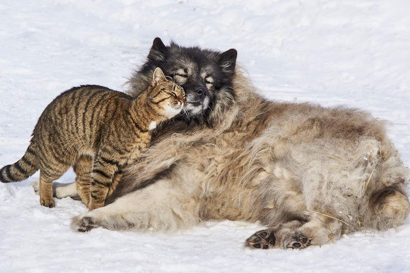 Gato e cachorro juntinhos