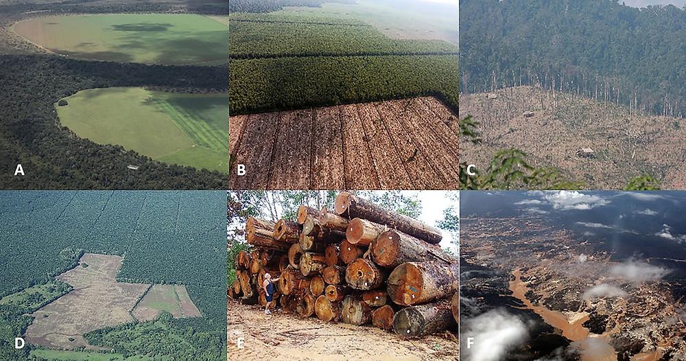 Florestas desmatadas