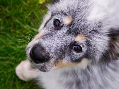A maioria dos cães tem olhar pidão. Até os de abrigo