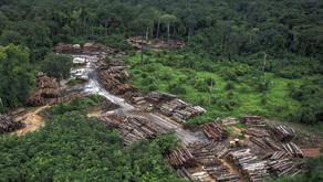 País oculta crimes ambientais com apagão de dados