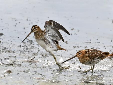 Um quinto das aves europeias está a perigo