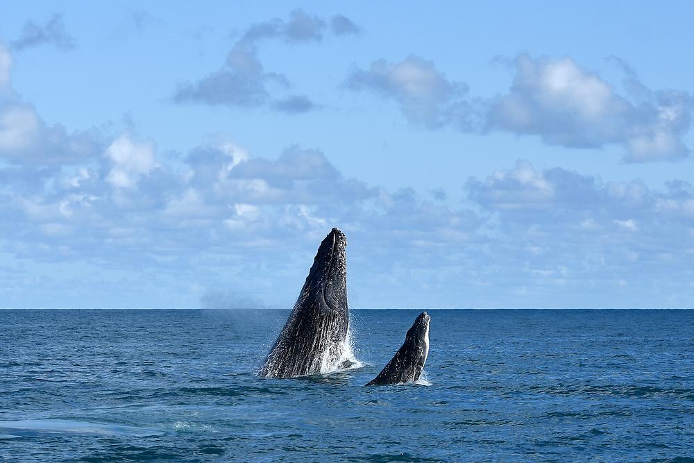 Baleia e filhote