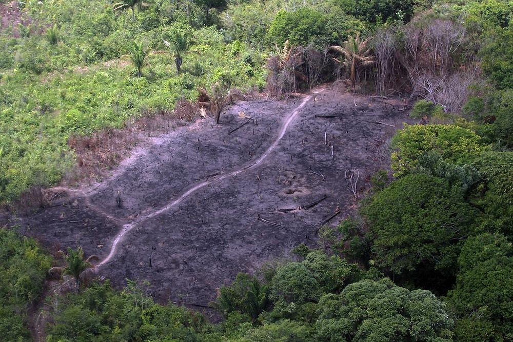 Área desmatada e queimada da Amazônia