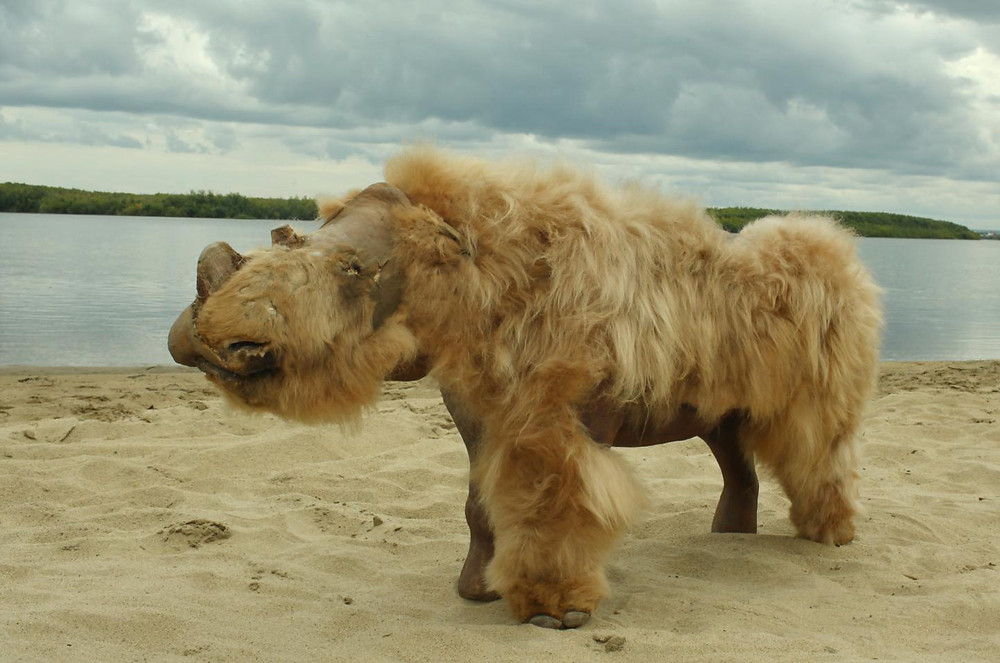 Rinoceronte-lanudo