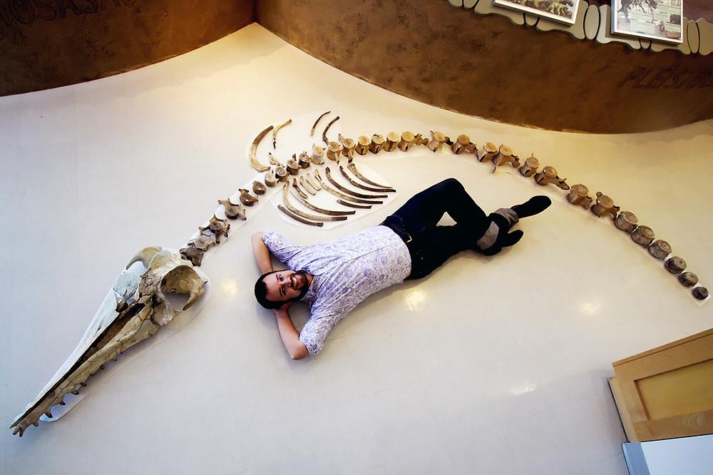 Esqueleto de golfinho gigante e pesquisador
