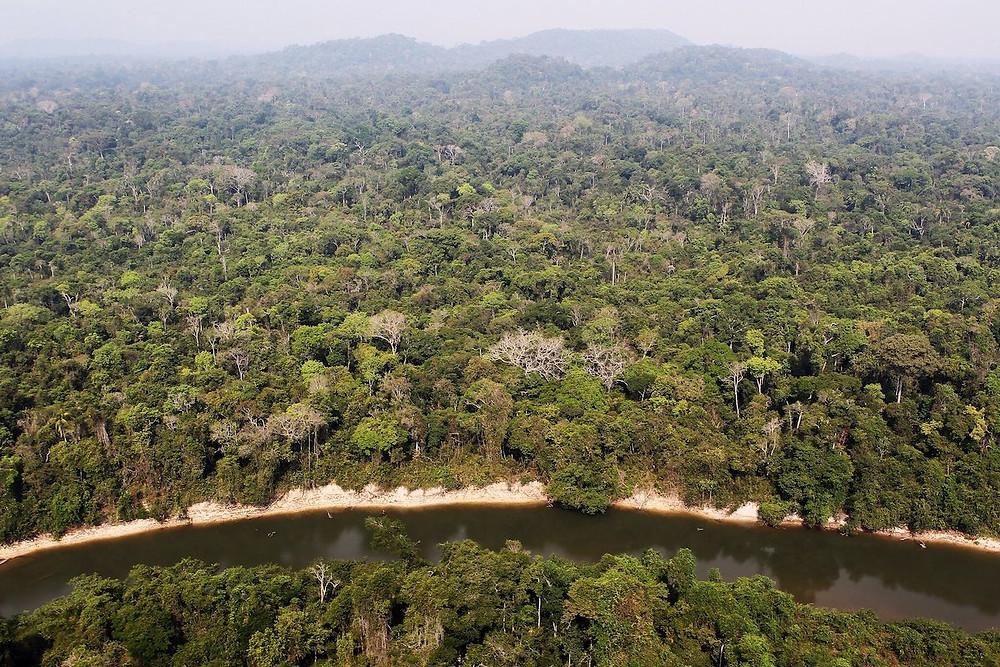 Floresta no Pará