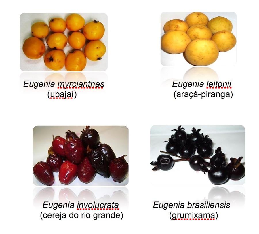 Frutas nativas da Mata Altântica