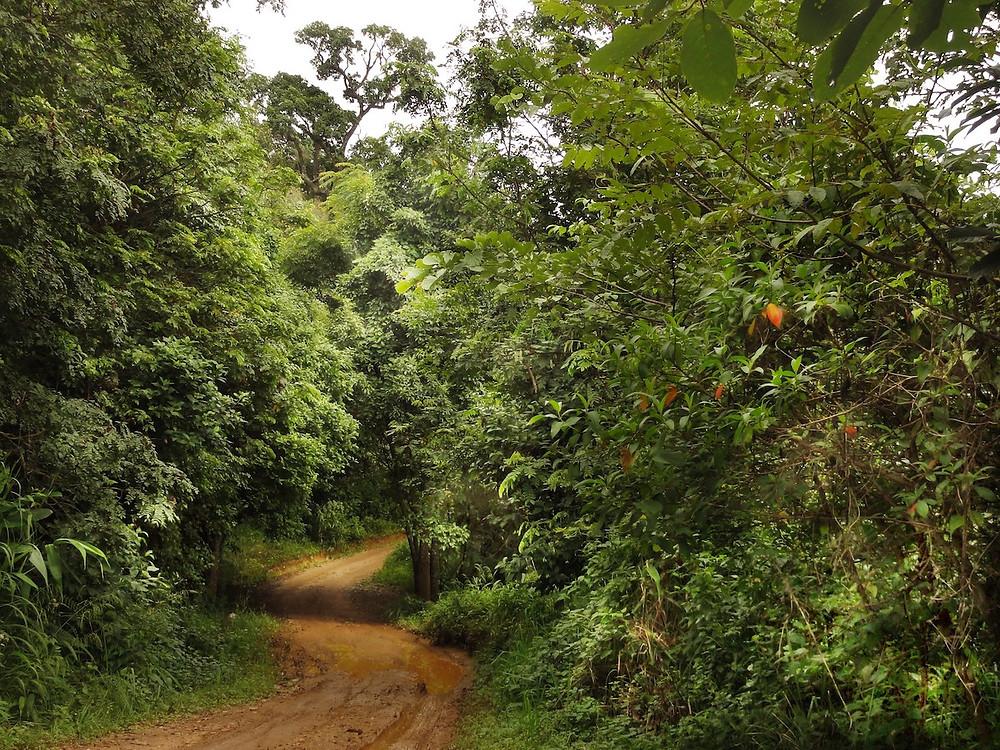 Floresta tailandesa restaurada