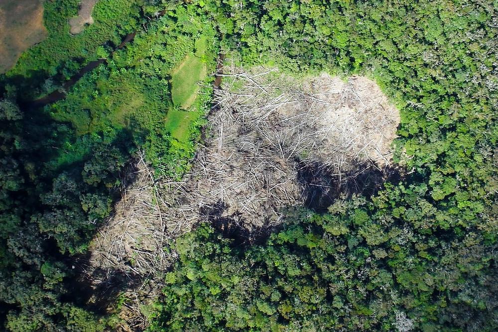 Floresta com trecho desmatado em Madagascar