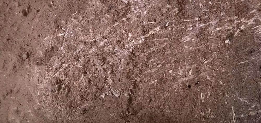 Vestígios de grama