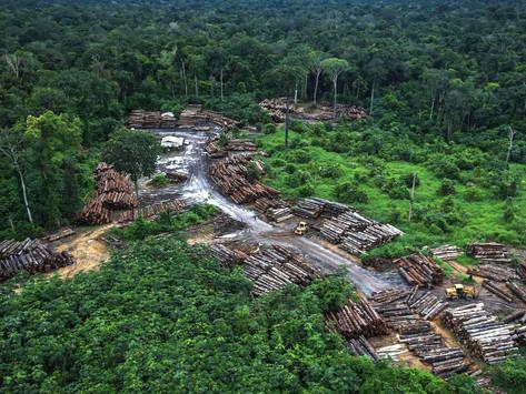 Quanto vale a destruição da Amazônia?