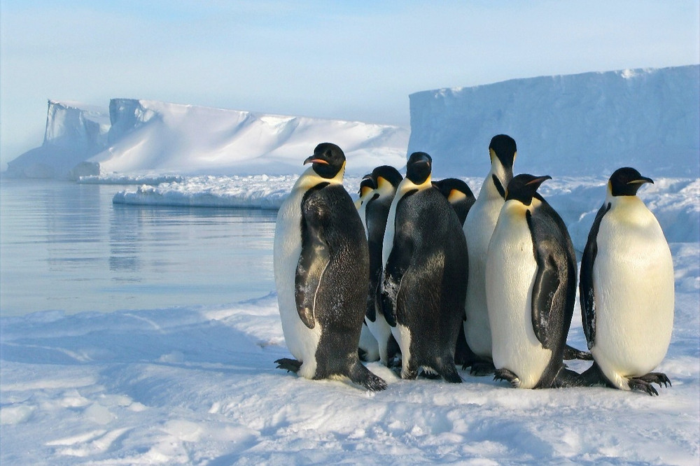 Pinguin-imperador na Antártica