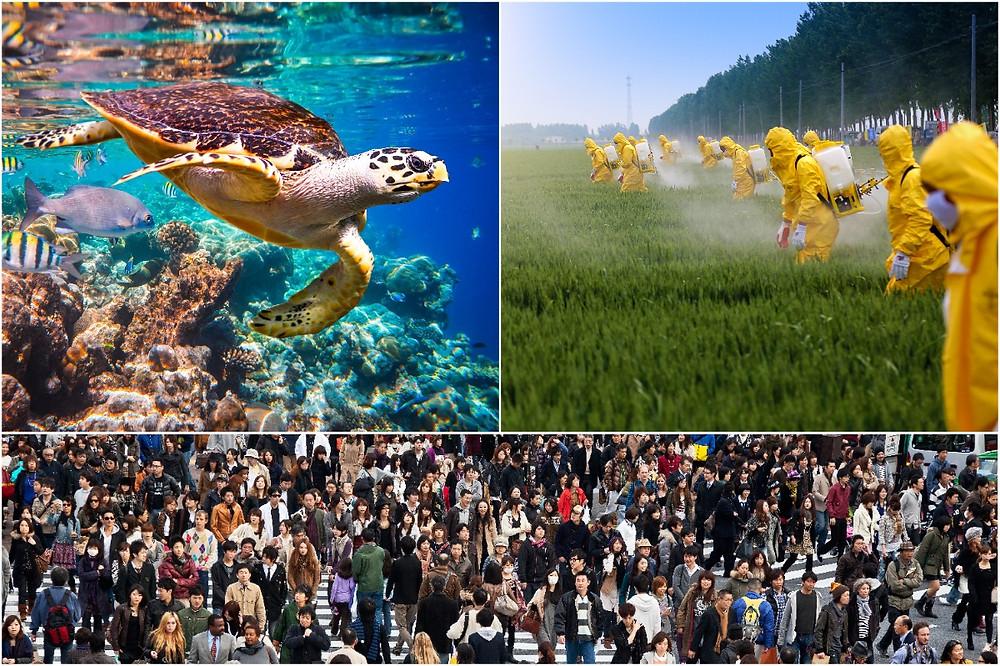 colagem de fotos: tartaruga, agrotóxicos e Tóquio