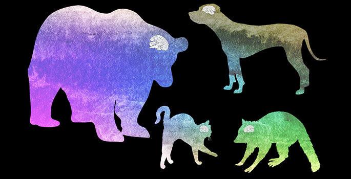 Tamanho de cérevro de vários animais