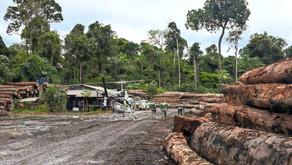 Desmatamento da Amazônia?  É com o Pará