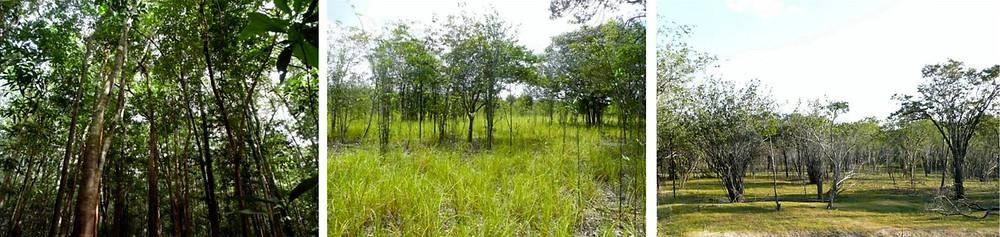 Vegetação da Amazönia