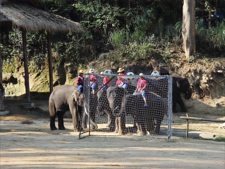 Jogo com elefantes