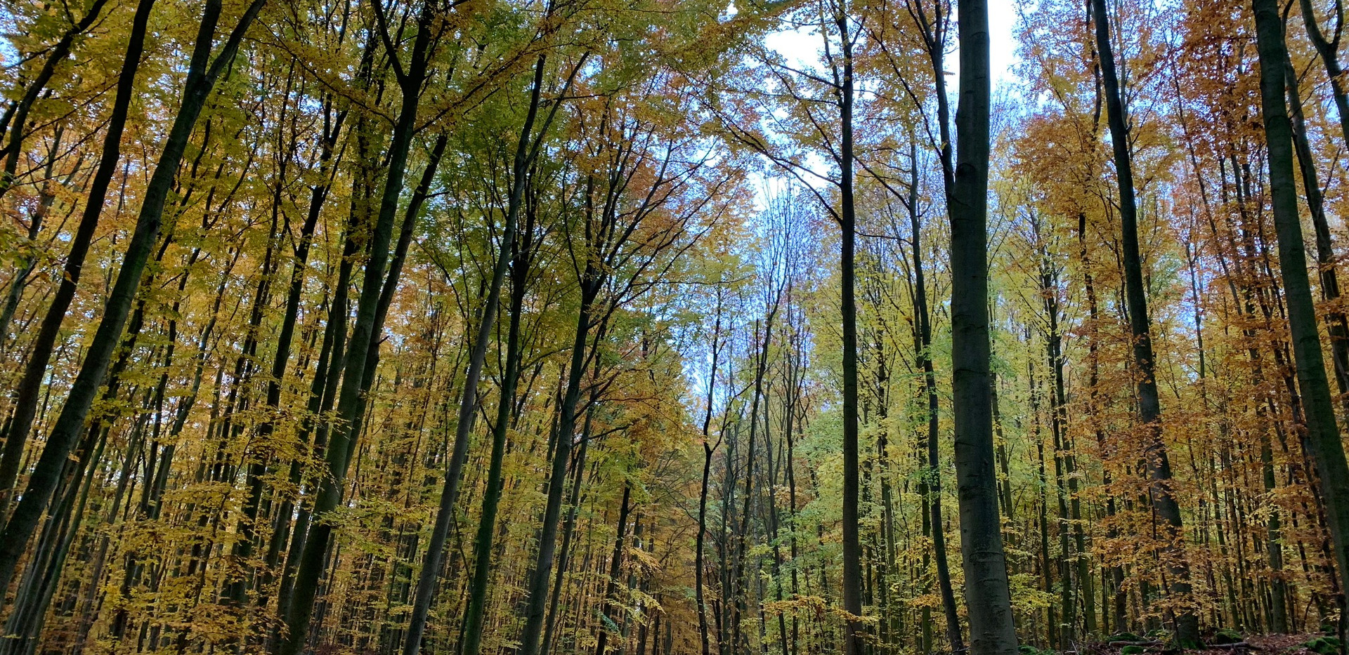 Kottenheimer Herbstwald