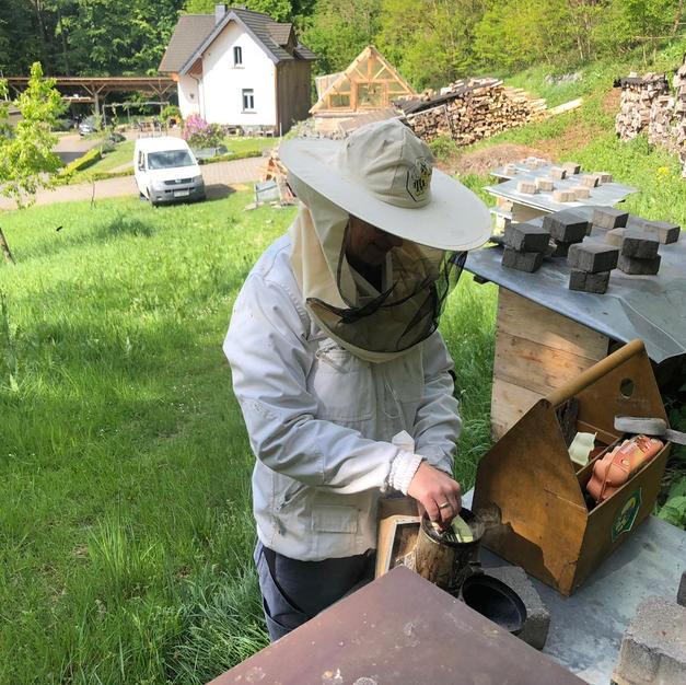 Arbeit am Bienenstock