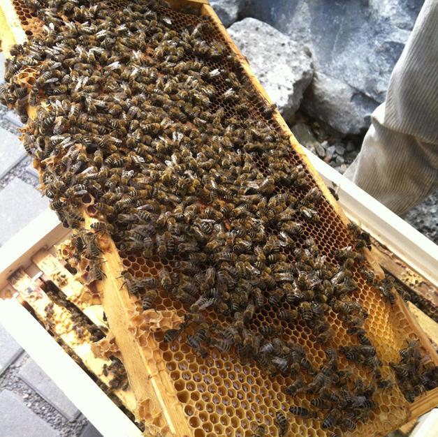 Sommerbienen