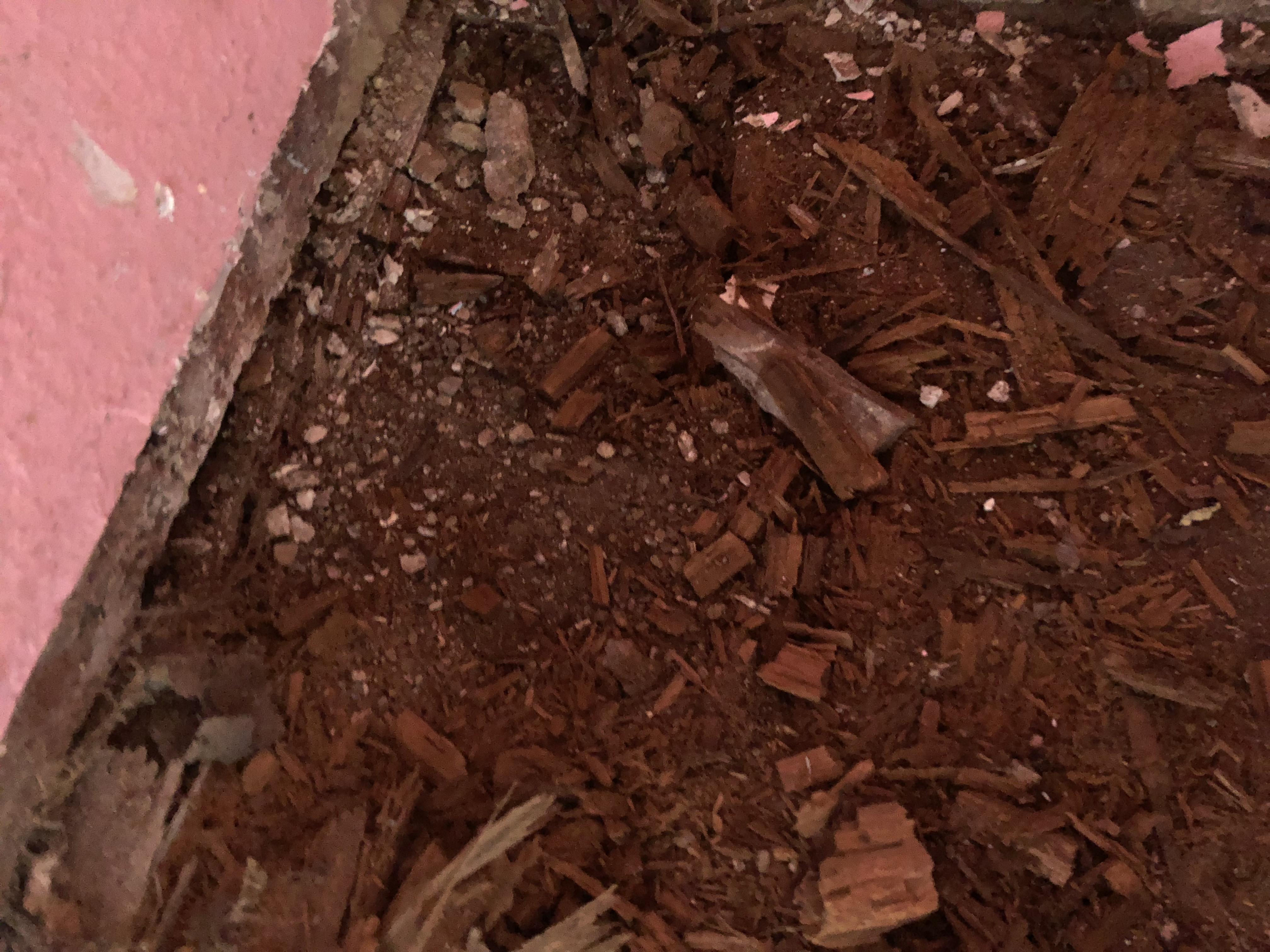 Fauler Holzboden