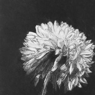 Ley Roberts-The Last Dahlia.jpg