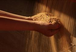 photo quinoa mains