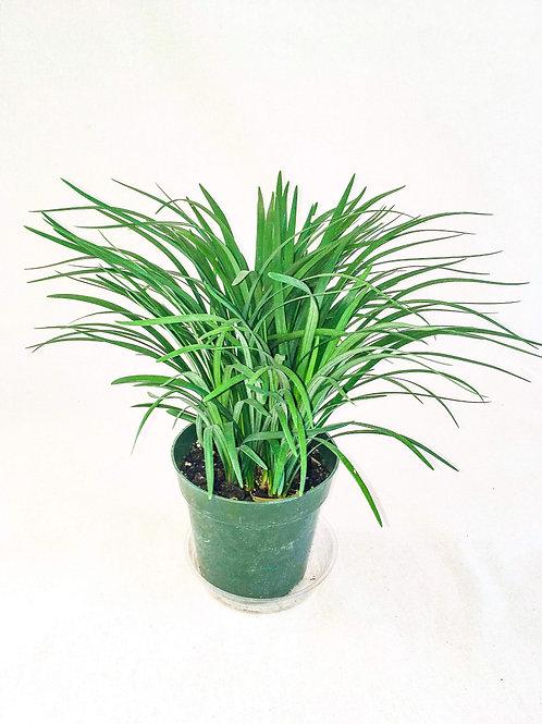 6 inch Decorative Grass