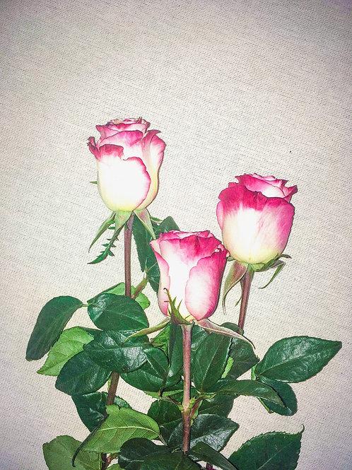 Carousel rose