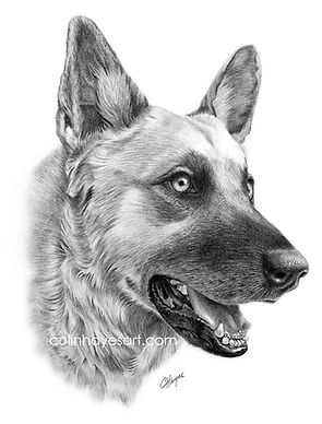 German Shepherd drawing pet portrait