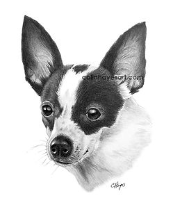 drawing of a rat terrier chihuahua mix