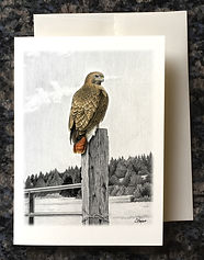 Red-tailed hawk on fencepost greeting card