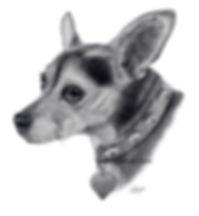 Chihuahua pencil drawing