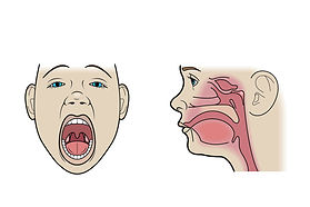 adnoids tonsils illustration medical