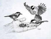 chickadees stipple drawing