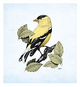 American Goldfinch stipple drawing