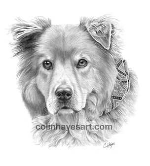 long hair dog drawing