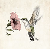hummingbird stipple drawing