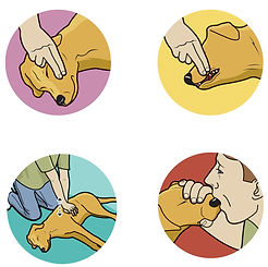 Giving a dog CPR how-to illustration