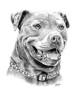 pit bull dog drawing